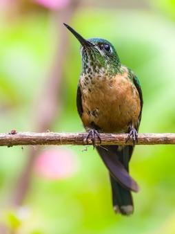 Colibri coloré reste sur un perchoir