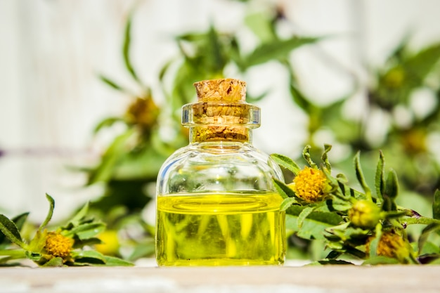 Collage d'herbes et d'huile essentielle. la nature.