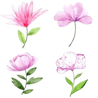 Collection aquarelle de fleurs roses et violettes isolées sur fond blanc