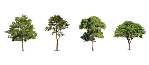 Une collection de beaux arbres isolés sur fond blanc, idéal pour une utilisation dans la conception architecturale, les publications et la décoration de sites web.