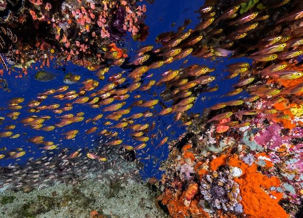 Une collection de beaux poissons