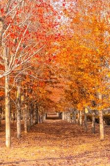 Collection de belles feuilles d'automne colorées / vert, jaune, orange, rouge