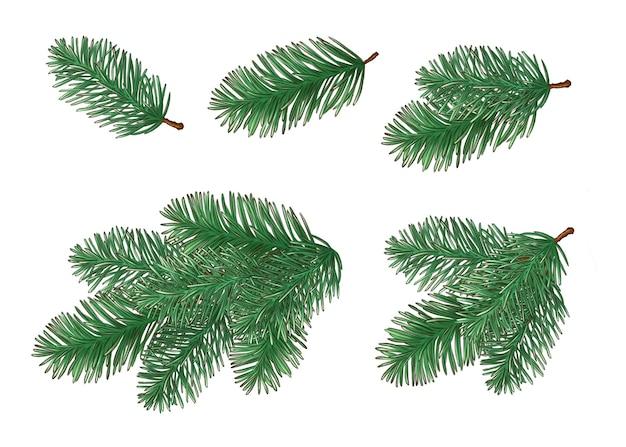 Collection de branches d'arbres de noël