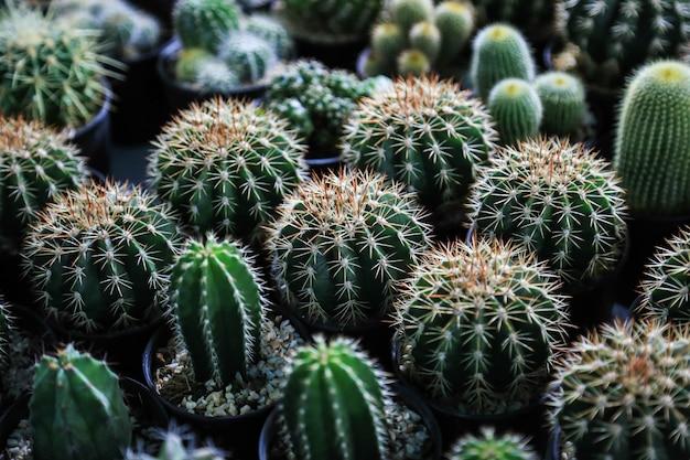 Collection de cactus en pots