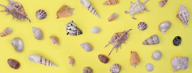 Collection de coquillages exotiques disposés sur fond jaune entier
