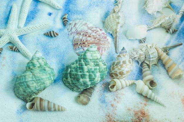 Collection de coquillages sur placé sur le fond de sable