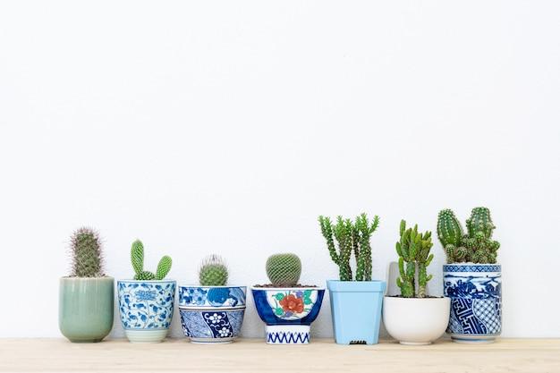 Collection de différentes plantes de cactus dans différents pots.