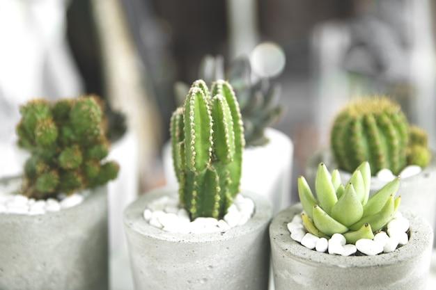 Collection de divers cactus et plantes succulentes dans différents pots. vente sur marché. mise au point sélective.