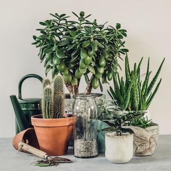 Collection de divers cactus et plantes succulentes dans différents pots.