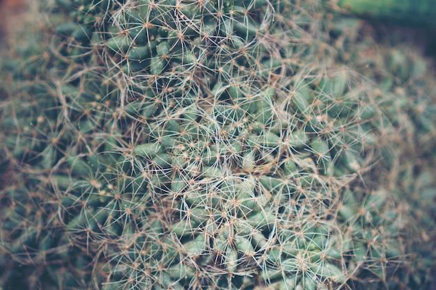 Collection de divers cactus et plantes succulentes dans différents pots