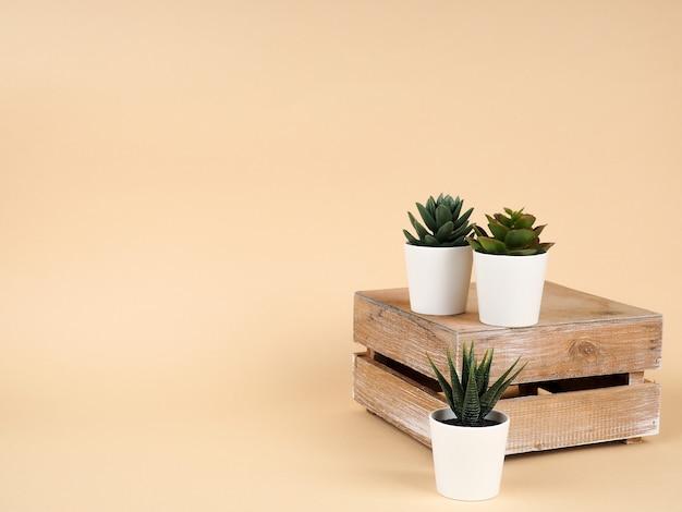 Collection de divers cactus et plantes succulentes