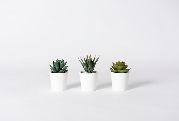 Collection de divers cactus en pot sur fond gris.