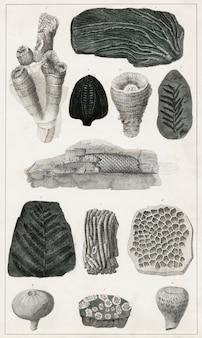 Collection de divers fossiles de une histoire de la terre et de la nature animée (1820)