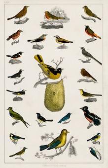 Collection de divers oiseaux de une histoire de la terre et de la nature animée (1820)