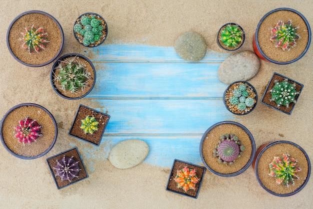 Collection de diverses plantes de cactus dans des pots différents sur fond bleu. vue de dessus