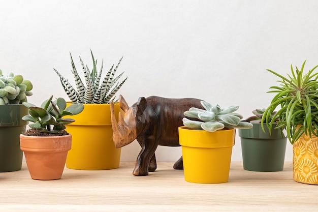 Collection de diverses plantes succulentes et plantes dans des pots colorés. cactus en pot et plantes d'intérieur contre un mur lumineux. le jardin intérieur élégant