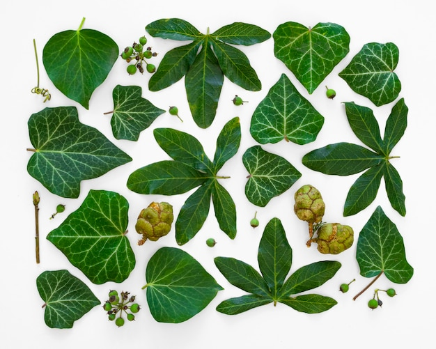 Collection de feuilles au carré