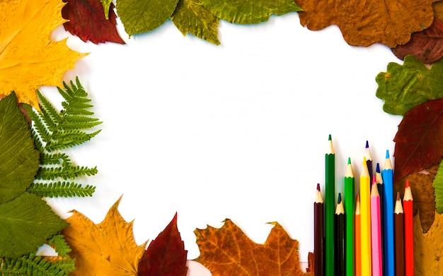 Collection de feuilles d'automne sur fond blanc