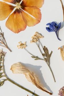 Collection de fleurs séchées sur un mur blanc