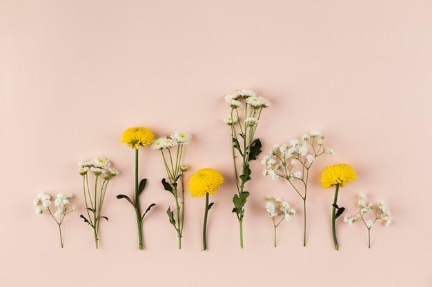 Collection de fleurs vue de dessus sur table