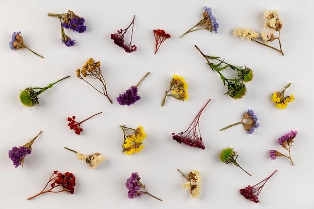 Collection florale vue de dessus