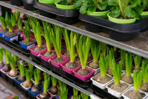 Collection de gros plan de belles plantes d'intérieur