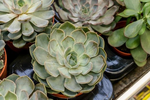 Collection de gros plan de plantes d'intérieur