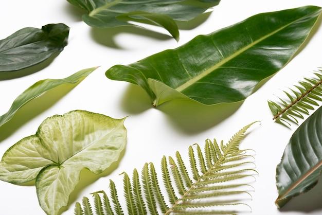 Collection de gros plans de feuilles naturelles