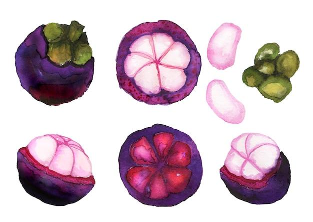 Collection de mangoustan aquarelle dessinée à la main isolée sur blanc