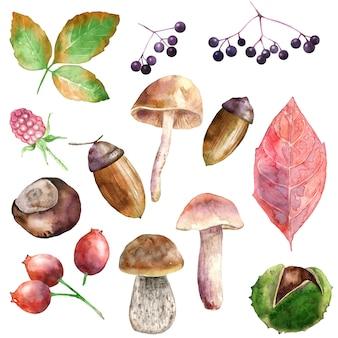 Collection de plantes forestières aquarelles