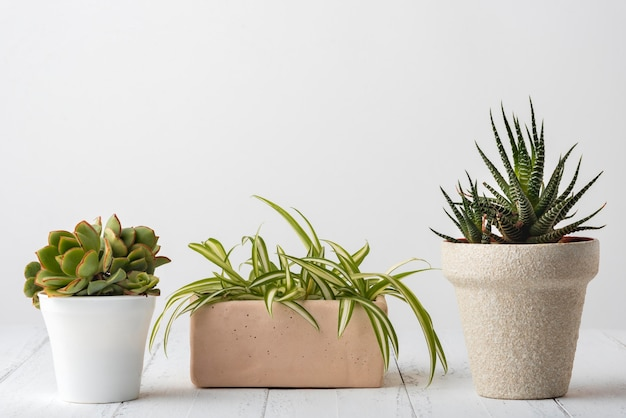 Collection de plantes vives avec espace copie