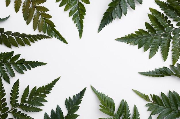 Collection vue de dessus du concept de feuilles vertes