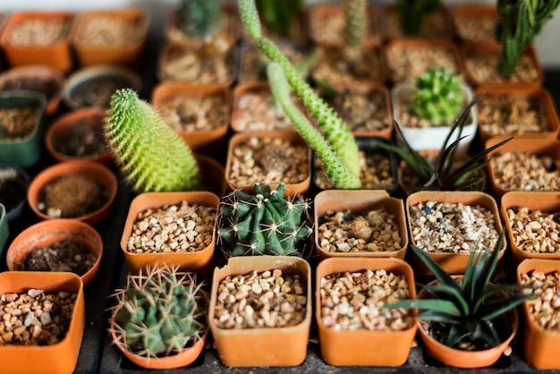 Collections seaux de cactus pierres organismes seaux