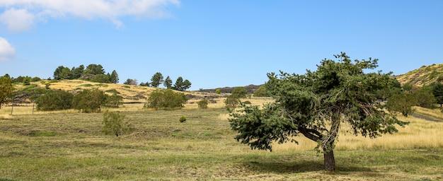 La colline des arbres