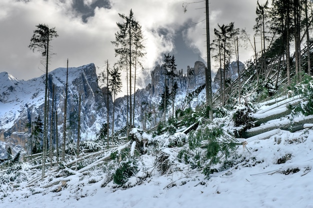 Une colline avec beaucoup d'arbres sans feuilles entourée de hautes montagnes rocheuses couvertes de neige dans les dolomites