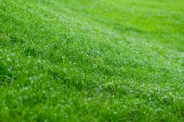 La colline est couverte d'herbe verte