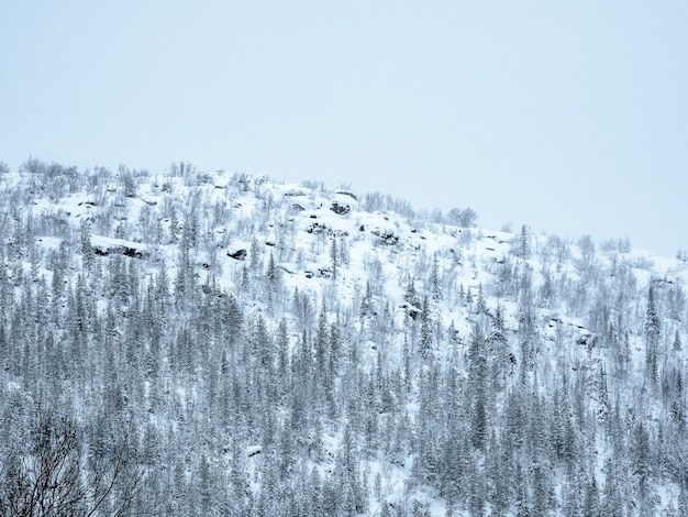 Colline polaire. passe de neige. collines de neige boisées de l'arctique en hiver