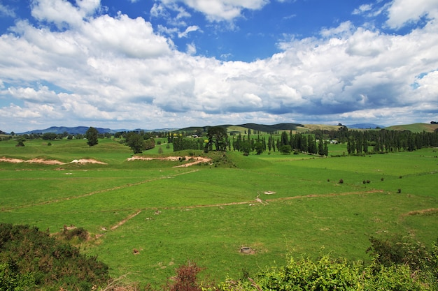 Collines et champs de nouvelle-zélande