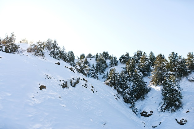 Collines couvertes de neige et de forêt