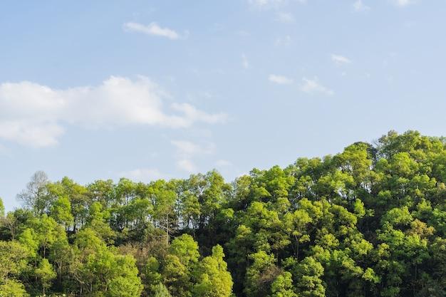 Collines du népal, couvertes de jungle. paysage avec forêt tropicale humide en plein jour d'été. image de référence pour le dessin cg, matte painting. stock photo.