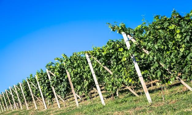 Collines du piémont en italie, région du monferrato. campagne pittoresque pendant la saison estivale avec champ de vigne. magnifique ciel bleu en arrière-plan.
