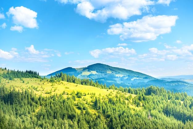 Collines ensoleillées vertes avec forêt, ciel bleu et nuages. paysage naturel