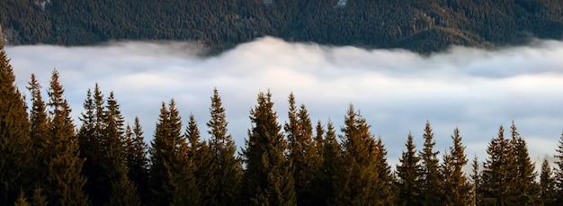 Collines de montagne sombres et lointaines couvertes d'une forêt de pins dense entourée de nuages blancs brumeux au lever du soleil.