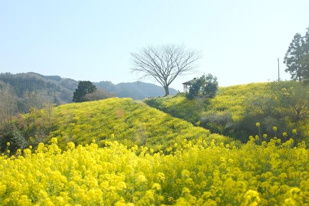 Les collines verdoyantes à la campagne