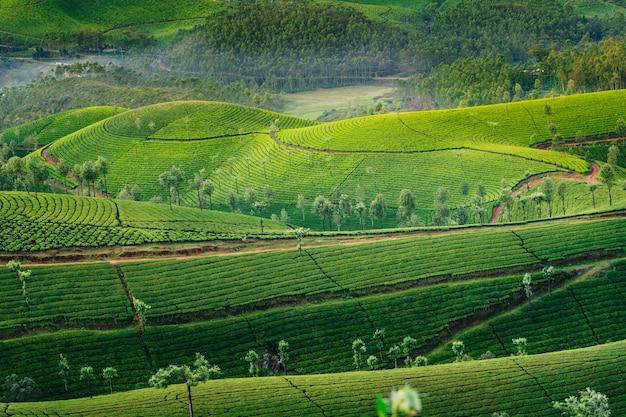 Collines verdoyantes de plantations de thé à munnar