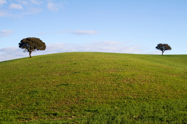 Collines vertes vides avec très peu d'arbres dispersés