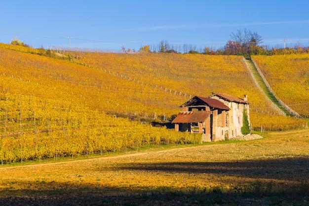 Collines de vignoble en automne