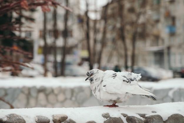 Colombe blanche sur une clôture ronde sur le paysage urbain d'hiver.