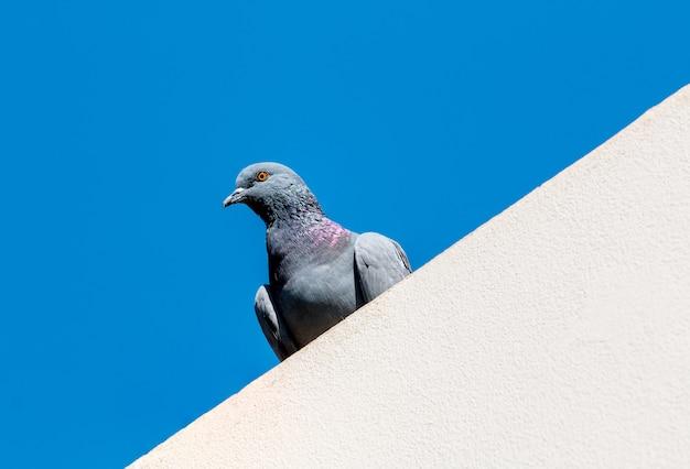 Une colombe debout sur un toit avec un ciel bleu