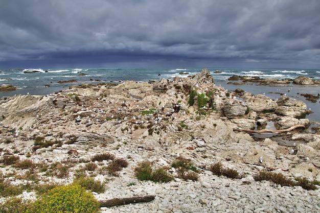 Colonie d'oiseaux à kaikoura, nouvelle-zélande